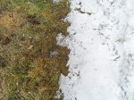 Snow vs. grass