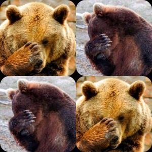 facepalm bears