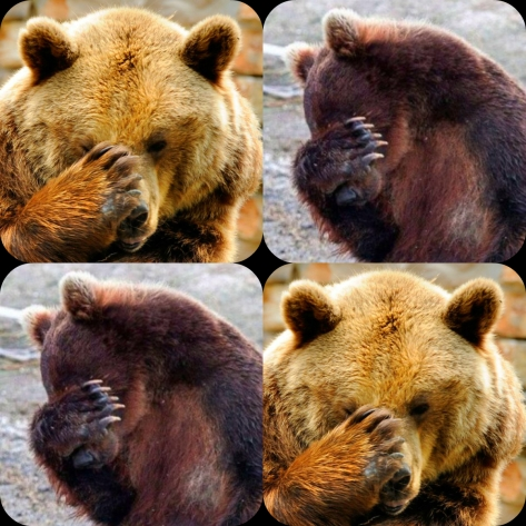 facepalm bears