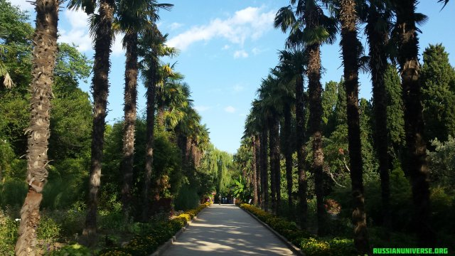 Nikitsky Botanical Garden (founded in 1812), Yalta, Crimea.